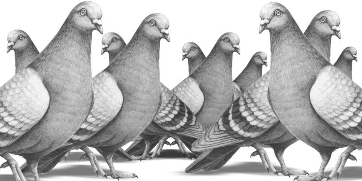 Tauben, Bleistift auf Papier, digitale Collage, © David Kröswang