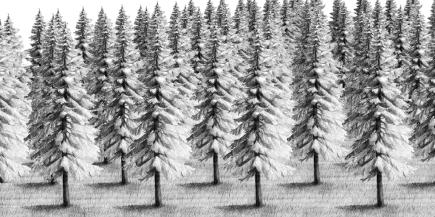 Wald, Bleistift auf Papier, digitale Collage, © David Kröswang